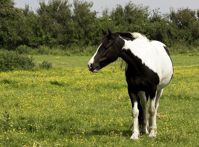 חוות סוסים בפראג