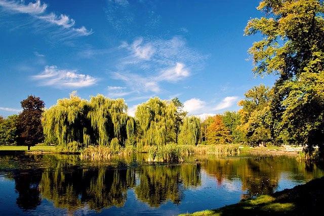 פארק העצים בפראג