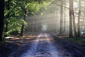טיול בפארקים של פראג באופן עצמאי ללא תלות במדריך